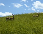 Trail Ridge Drive, Big Horn image