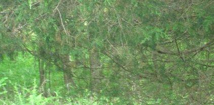 Unit 2 Sec 2 Lot 161 Driftwood Est, Eddyville