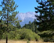 Lot 31-4 Shasta Meadow Vue, Weed image